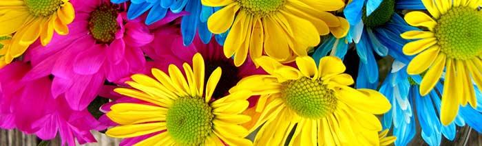 Pintar Flores Por Capilaridad Y Por Absorsión Directa Pintura