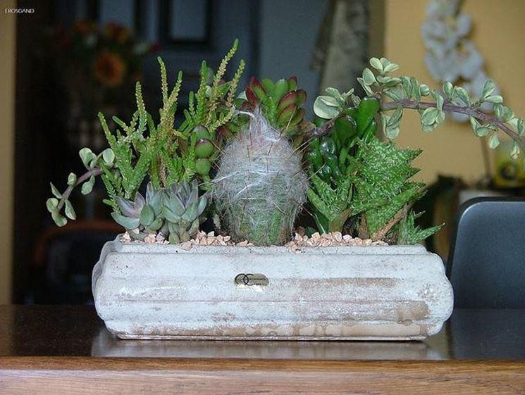 composición de plantas suculentas