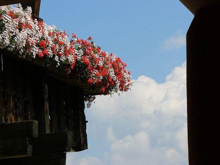 Balcón en flor