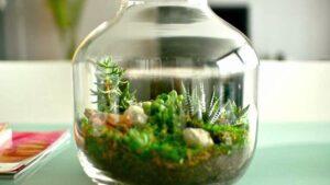 Cómo cultivar plantas dentro de una botella