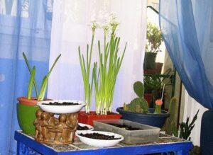 Plantas de interior para casa